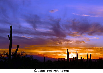 Arizona Sunset - An Arizona Sunset near Tucson golden sky...