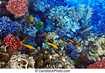 Coral and fish in the Red Sea Egypt, Africa - Coral and fish...