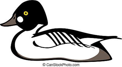 Goldeneye Duck - Vector illustration of a common goldeneye