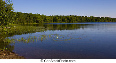 Forested Shoreline - A forested shoreline of a lake in the...