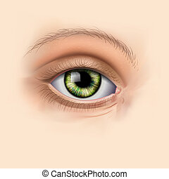 綠色, 婦女, 眼睛, 向上, 關閉