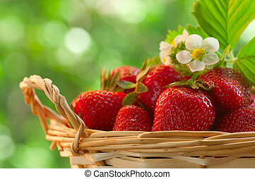 Strawberries in a basket in the garden