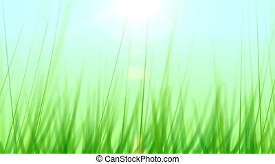 Grass Background 01 24fps - Artificial and stylized blades...