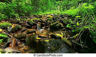 forest stream - mountain stream in the forest