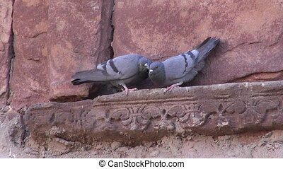 two pigeons on old indian wall