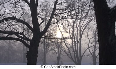 sunlight in the mist and tree