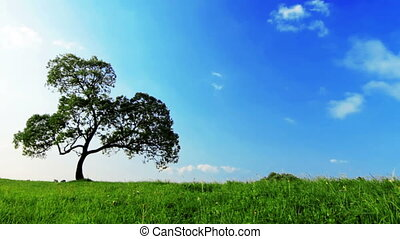 summer landscape - lonely tree in the green field