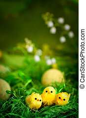 Easter chicks - Easter yellow chickens in spring valley...
