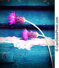 Pink cornflowers - Photo of beautiful pink cornflowers on...