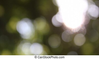 Blurry Nature Background - Blurry nature background and...