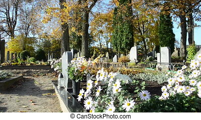 marguerite grave cemetery - decorative marguerite flower...