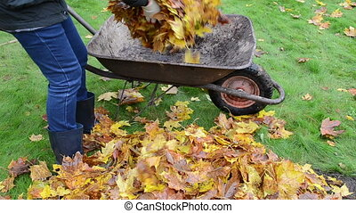 woman load barrow leaves - blond worker woman hands load...