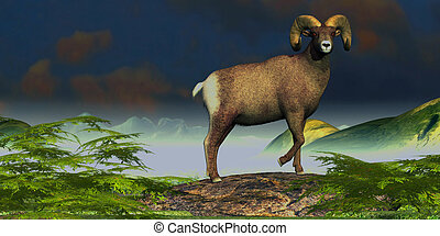 Big Horn Sheep - A Big Horn Sheep ram stands proudly on a...