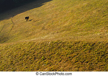 Wild horses in the picturesque valley