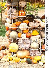 Colours Pumpkins  - Pumpkins with different colours