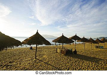 trópicos, mañana, escena, pacífico, Océano, playa