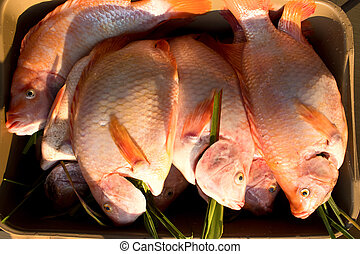 Freshness reddens the Nile Tilapia fish Oreochromis...