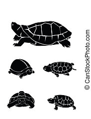 turtle Collection Set