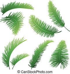 Branches of palm trees - Set green branches with leaves of...