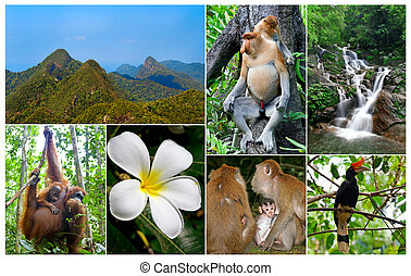 Malaysian Jungle - Collage of wildlife and nature in the...