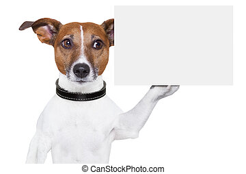 copy space placard dog - dog holding a blank white cardboard...