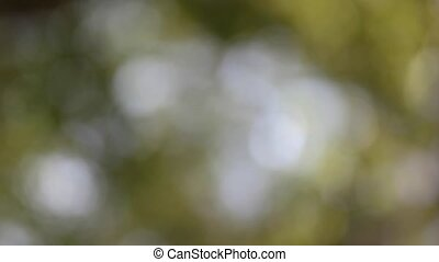 Looping Nature Background - Blurry Leaves and shining...