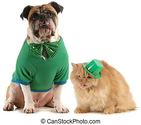 st patricks day dog and cat isolated on white background