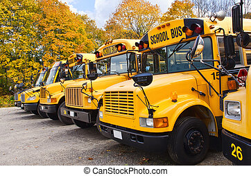 Yellow school buses in row