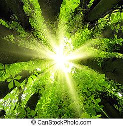 Sun shining through treetops - Eye-catching canopy scenery...