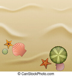 Seashells on sand, background - Sea urchin shells, starfish...