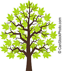 Tree maple with green leafage, illustration