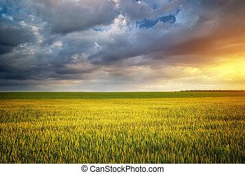 Beautiful landscape. Green meadow on sunset.