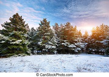 Winter landscape. Composition of nature.