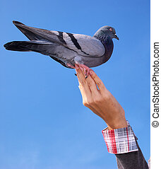 Girl feeds the dove.