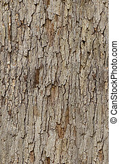 Tileable tree bark texture