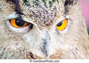 Eyes expression - Eyes of the owl