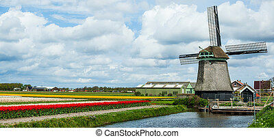 Springtime In Holland - Landscape with Ducht windmill and...