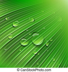 Green leaf with drops of water, vector Eps10 illustration