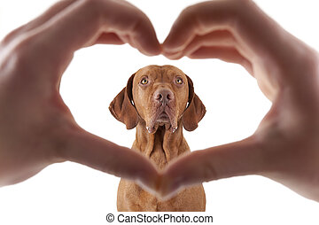 we love dogs - human hand forming a heart shape frame in the...