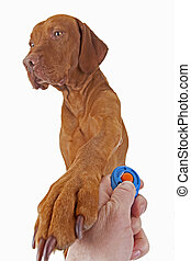 dog training with positive reinforcement - dog resting paw...