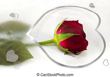 Red rose and hart - Red rose flower with silver hart on...