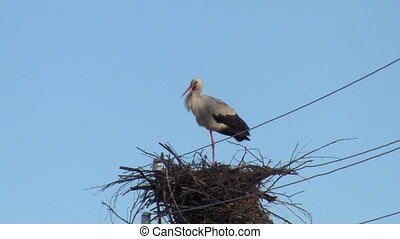 stork clicks beak