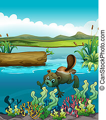 A beaver near the coral reefs - Illustration of a beaver...