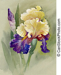 Watercolor Flower Collection: Iris - beautiful iris painted...