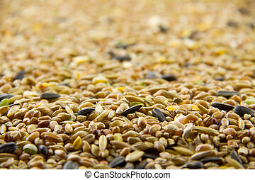 Bird seed, differential focus - A shot of bird seed mix...