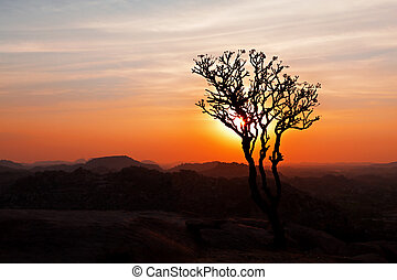 Tree in the sunset sky, Hampi, India