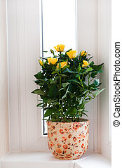 Yellow roses on the windowsill