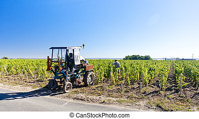 vineyard with a tractor, Bordeaux Region, France