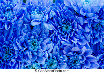 Blue Dahlia - Closeup Photo Of Dahlia Blue Flowers