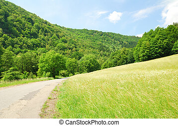 Green Valley with empty road and forest hillsides